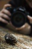 Caracol y fotógrafo Foto de archivo libre de regalías