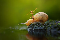 Caracol y hormiga Fotografía de archivo libre de regalías