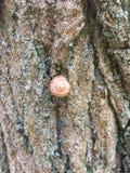 Caracol y liquen en la corteza de árbol Foto de archivo libre de regalías