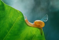 Caracol y mariposa, Bokeh, Imagen de archivo