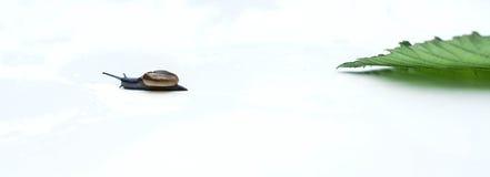 caracoles Foto de archivo