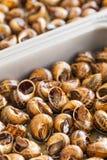 Caracoles cocinados Foto de archivo libre de regalías