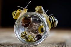 Caracoles coloridos grandes y pequeños en un tarro de cristal Vector de madera Fotos de archivo libres de regalías