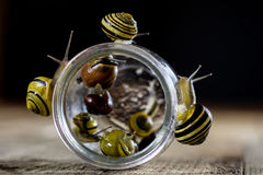 Caracoles coloridos grandes y pequeños en un tarro de cristal Vector de madera Imágenes de archivo libres de regalías