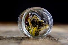 Caracoles coloridos grandes y pequeños en un tarro de cristal Vector de madera Imagen de archivo