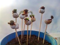 Caracoles con los suculents Foto de archivo
