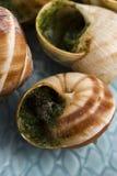 Caracoles con mantequilla de ajo Imagen de archivo libre de regalías