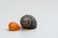 Caracoles de mar Foto de archivo libre de regalías