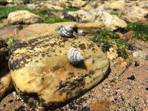 Caracoles de mar Imagenes de archivo
