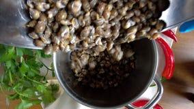 Cocinar Caracoles De Mar   Cocinar Caracoles De Mar Metraje Stock 6 Cocinar Caracoles De Mar