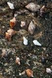 Caracoles de mar en la costa rocosa imagenes de archivo