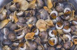 Caracoles de mar o moluscos marinos del gastrópodo Fotos de archivo