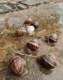 Caracoles después de la lluvia Foto de archivo