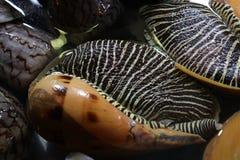 Caracoles, mariscos Imagen de archivo libre de regalías