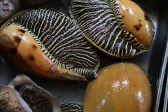 Caracoles, mariscos Fotografía de archivo libre de regalías