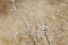 Caracoles minúsculos en las plantas Fotografía de archivo