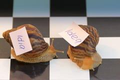 Caracoles y una idea lenta Foto de archivo libre de regalías
