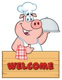 Caractère de Pig Cartoon Mascot de chef avec un plateau de cloche au-dessus d'un signe en bois renonçant à un pouce illustration de vecteur