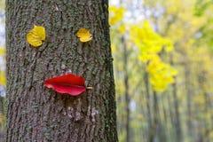 Caractère drôle des feuilles sur le tronc d'un arbre en parc d'automne photos libres de droits