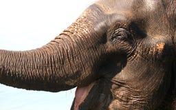 Caractéristiques faciales d'éléphant asiatique Images libres de droits