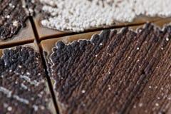 Característica da colônia dos actinomicetos, das bactérias, do fermento e do molde em meios seletivos das amostras do solo para o imagem de stock royalty free