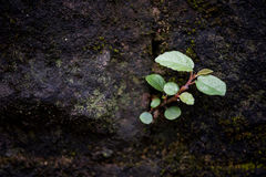 A característica de plantas selvagens Fotos de Stock Royalty Free