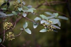 A característica de plantas selvagens Fotografia de Stock