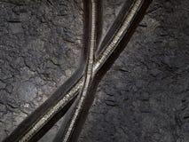 Característica fóssil do lírio de mar de Crinoid na chapa da terra firme Imagens de Stock Royalty Free