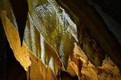 Característica Geological da caverna da pedra calcária da cortina Fotos de Stock Royalty Free