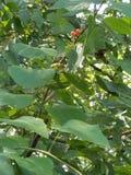 Características das árvores Fotos de Stock Royalty Free