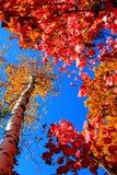 Características de la estación del otoño Imagen de archivo libre de regalías