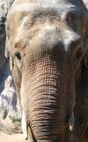 Características faciales del elefante asiático Imágenes de archivo libres de regalías