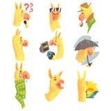 Caracteres lindos de la alpaca que presentan en diversas situaciones, ejemplos coloridos de diversas actividades de la alpaca de  ilustración del vector