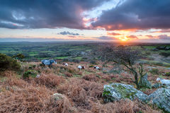 Caradon Hill on Bodmin Moor Royalty Free Stock Photo