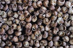 Caragols a la llauna, catalan recipe of snails royalty free stock photos