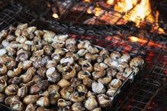 Caragols un llauna della La, una ricetta delle lumache tipiche della Catalogna, Spagna immagini stock libere da diritti