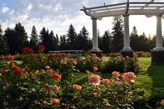 Caramanchão da coluna do Corinthian dos pinheiros do jardim de rosas imagem de stock