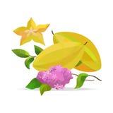 Carambola- und Blumenvektorgegenstände Stockfotos