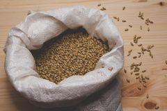 Caramel malt in a bag on a wooden background. Craft beer brewing. From grain barley pale malt in process. Ale or lager from pilsner malt Stock Image