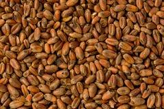 Caramel Wheat Malt Royalty Free Stock Photography