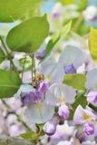 Caramelo coloreado multi de los sabelotodos - foto común Imagenes de archivo
