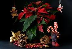 Caramelo de la Navidad fotos de archivo