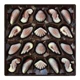 Caramelos de chocolate, concha marina y trufas del seahorse, dulces artesanales en una caja Imagenes de archivo