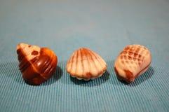 Caramelos de la concha marina Imagen de archivo
