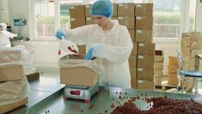 Caramelos del embalaje del obrero Fábrica del caramelo almacen de metraje de vídeo