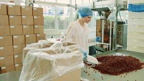 Caramelos del embalaje del obrero Fábrica del caramelo almacen de video