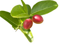 Carandas-plum fruit isolated. This has clipping path. Royalty Free Stock Photography