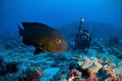 Caranga da meia-noite & fotógrafo subaquático Fotos de Stock Royalty Free