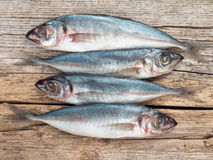 Carangidae fishes on the gray wooden board Royalty Free Stock Photo