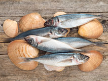 Carangidae fishes and seashells on the gray wooden board Stock Images